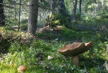 Mushroom forest / Sienimetsiä
