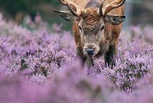 deers...
