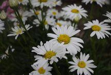 Blumen / Ich war in unserem Garten und habe die schönsten Blumen festgehalten, um sie mit euch zu teilen.
