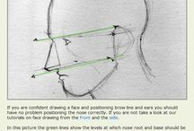 Anatomy   Nose