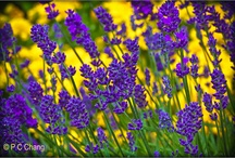 Purple  / by Bola Akande