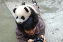 Me and the panda bear
