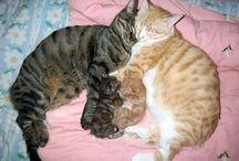 Cat Love  / by Ilana Meilak