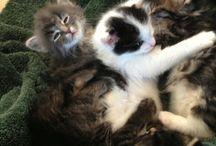 I love cats / Cute