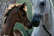 Equestrian / by Patti Johnson Interiors