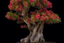 Bonsai / by Scott Anderson