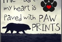 My HeArT iS PaW sHaPeD