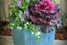 Plants / by Joanna Myers Blackwell