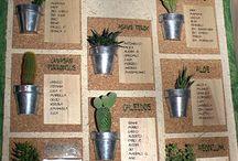 natrimonio piante grasse