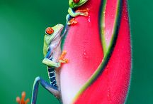 Frogs / by Janna Jones