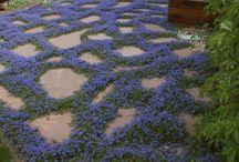 Garden - ground cover