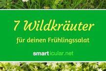 Heilkräuter Wildkräuter Frühling