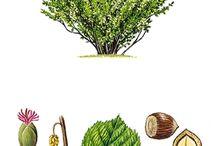 huby ,kriky ,stromy