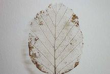 leaf skellet