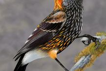 World of Birds / Those who make the World liveable