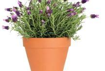 Flowers' & plants' care