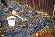 hnojivo na kvety jahody