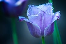 Color - Blue Violet & Purple / by Neadeen Masters
