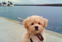 Cute!!! / by Sheri Carpenter