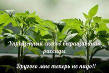 Растим рассаду