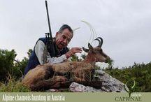 Alpine chamois hunting in Austria