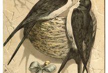 ptaki, zwierzęta i inne
