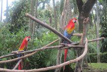 Visita al zoológico de Yumká en Tabasco México...