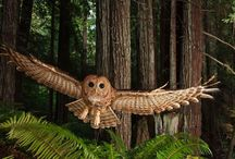 Astounding Owls / Beautiful pics of our favourite nocturnal bird.