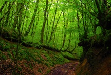 Arbres et forêts du Morvan / Balades en sous bois, traces d'animaux, arbres majestueux, tapis de feuilles .... tout ce qui nous fait aimer la forêt