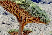 Fa (tree)