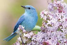 Beautiful Bird Pic