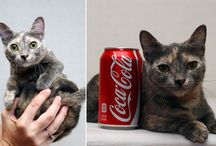 World's Smallest Cat / Measure up: Pixel is set to become a superstar