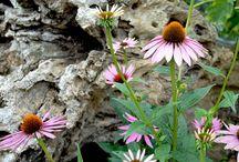 Balkonien – Blumen 2015