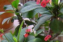 φυτα που εχω