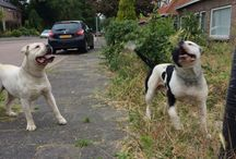 My Doggs