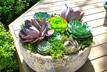 Succulents pot ideas