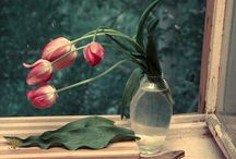 Мой тюльпановый рай/My milkweed paradise