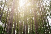 Nature landscape photography / Sonoma county California, Northern California, wine country, Santa Rosa California.