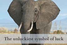 Animal symbolisim