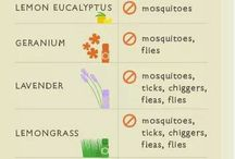keep bugs out with essential oils