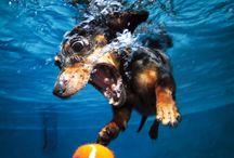 Sous l'eau / -