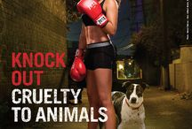 Stop cruelty & neglect