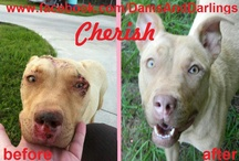 Dams And Darlings Dog Rescue / These are all our available dogs that are looking for a home! Please look thru the album and send an email for more adoption info! DamsAndDarlings@yahoo.com