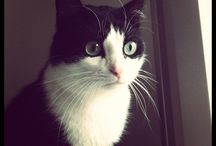 Innuendo / Hi I'm Innuendo, 3 years old. My mum adopted me from the shelter when I was 1 ½ years.