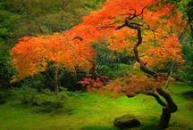 Greenfingers / Gardening