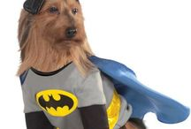 Costumes for Pets / Shop Online Dogs & Cats Costumes at affordable price for Halloween Parties.