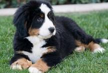 Cute Puppies & Kittens / Cute puppies around the World