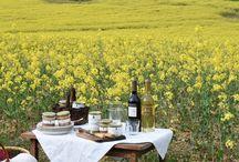 Le printemps du Lauragais / A l'heure où le Soleil vient réchauffer la campagne il est temps de reconquérir les prés, paieries et plaines que l'hiver nous a enlevés! Alors sortons nos paniers de piqueniques!