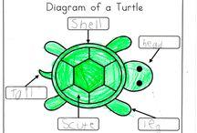 Expository text for Kindergarten