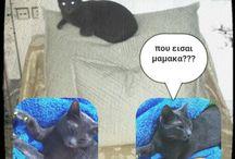 foto / Cats